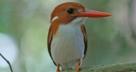 Oiseau ankarafantsika mahajanga