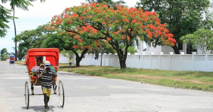 Le i pousse pousse sous les flamboyants de Tamatave